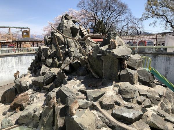 2019-04-20 動物園ニホンザル