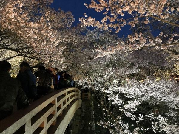 2019-04-20 夜桜2