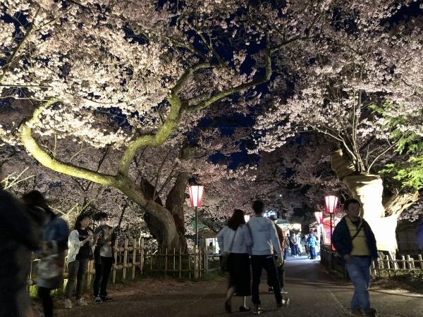 2019-04-20 夜桜4
