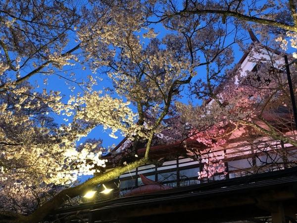 2019-04-20 夜桜1
