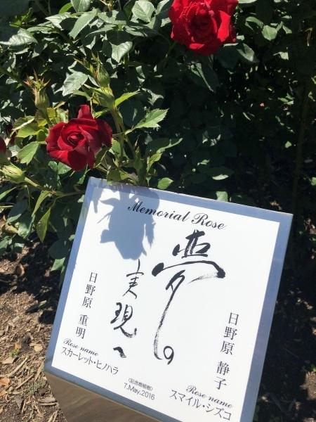 日野原さんのバラ