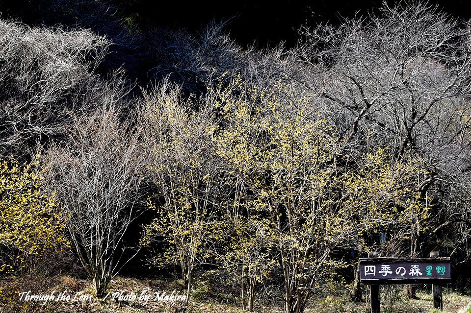 四季の森星野56D1