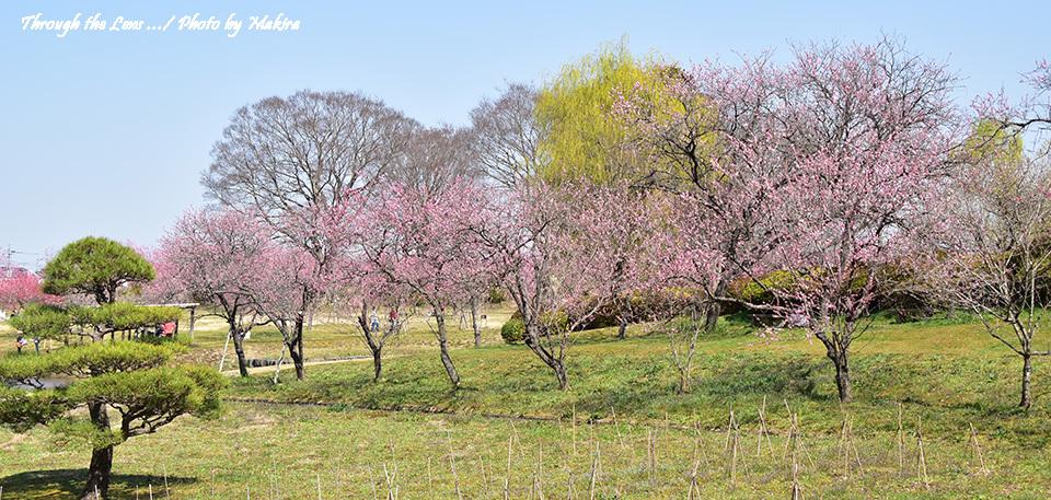 古河総合公園(古河公方公園)56D1
