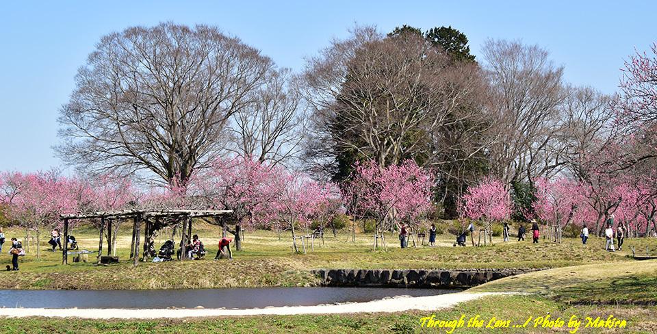 古河総合公園(古河公方公園)56D2