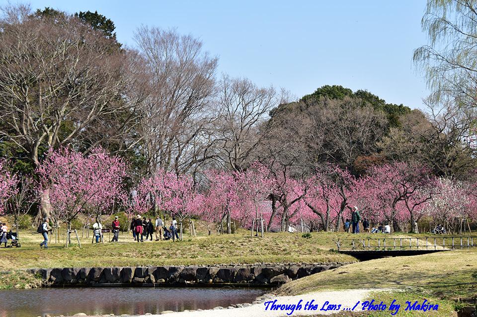 古河総合公園(古河公方公園)56D3