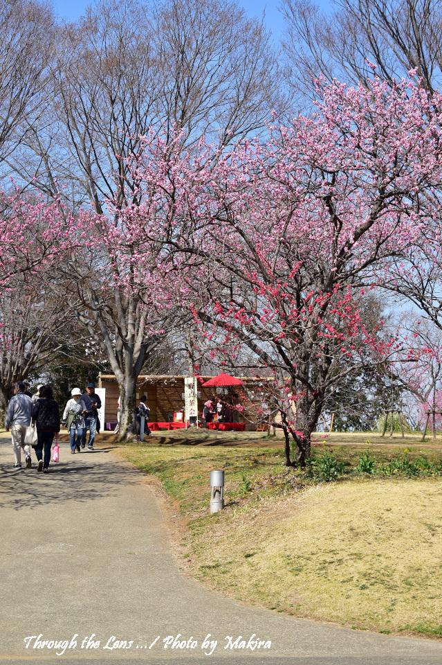 古河総合公園(古河公方公園)56D5