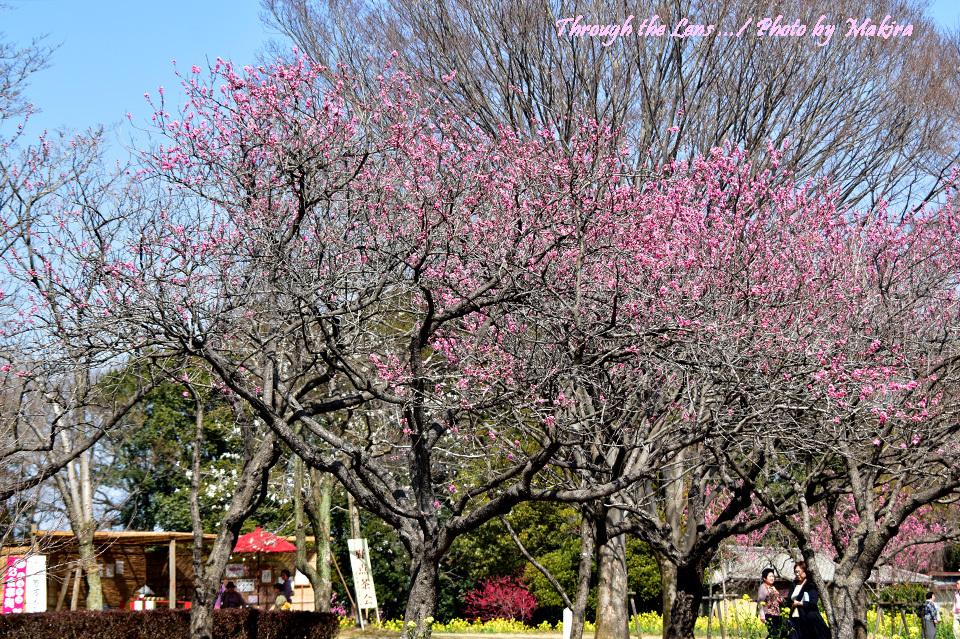 古河総合公園(古河公方公園)56D6