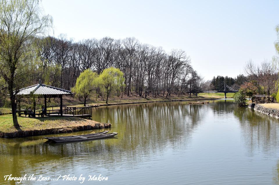 古河総合公園(古河公方公園)御所沼56D1