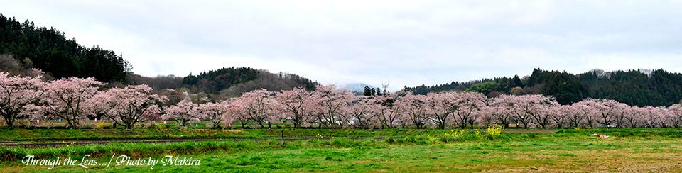 千本桜11