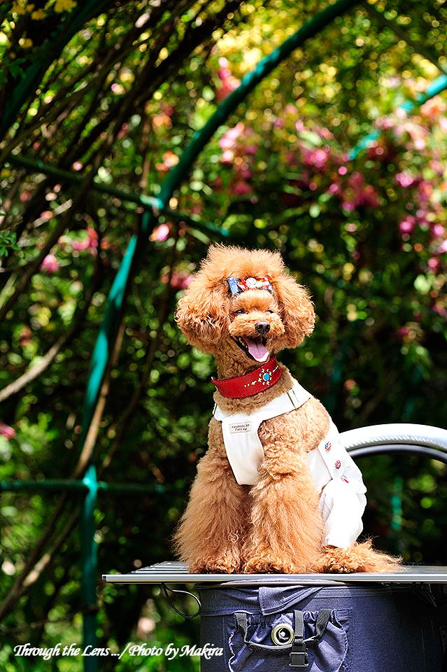 モデル犬1