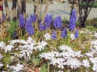 春が来てますね