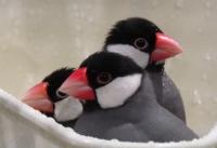 水浴びの時、鳥の駅