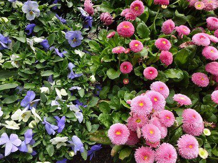 春らしい 風景