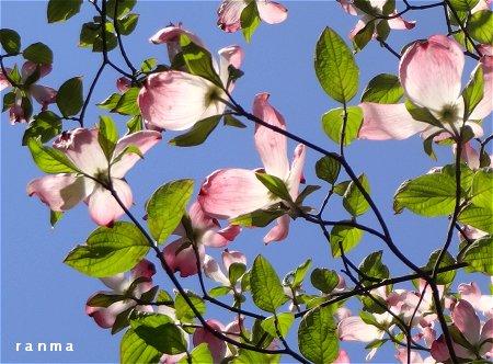 そこらの家の 庭木にすら 美しさを垣間見る 1