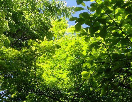 新緑の候 心が癒やされる時期 1