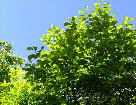 新緑の候 心が癒やされる時期 2