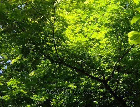 新緑の候 心が癒やされる時期 3