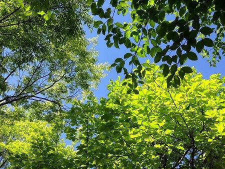 青空 空 緑 新緑 5月 1