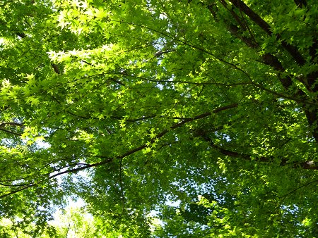 青空 空 緑 新緑 5月 2