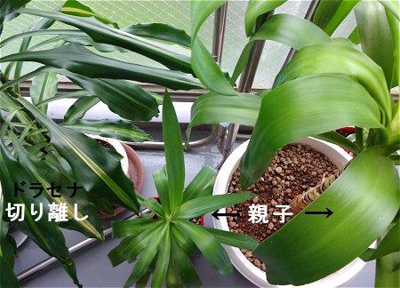 植え替え 植物