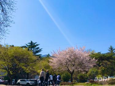 春のキャンパスでお花見を楽しめる。
