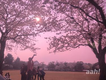 済州のキャンパスでも桜が見事でした。