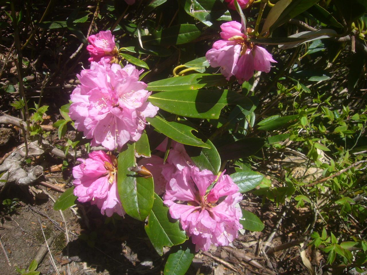 石楠花 R1.5.04