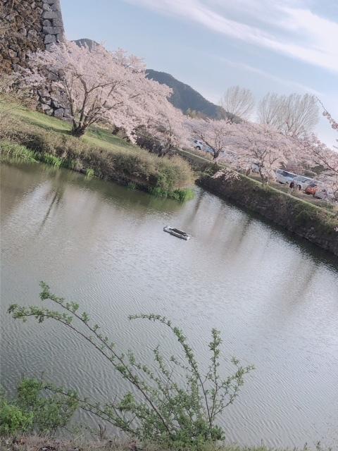 sasayama_sakura5