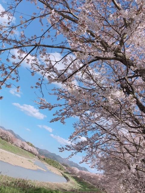 sasayama_sakura7