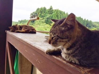 野良猫 4