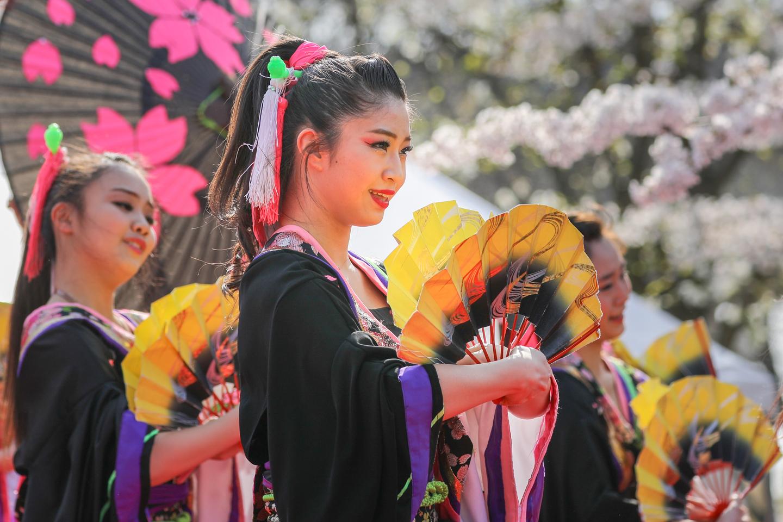 1440reika2019senbonsakura-35.jpg