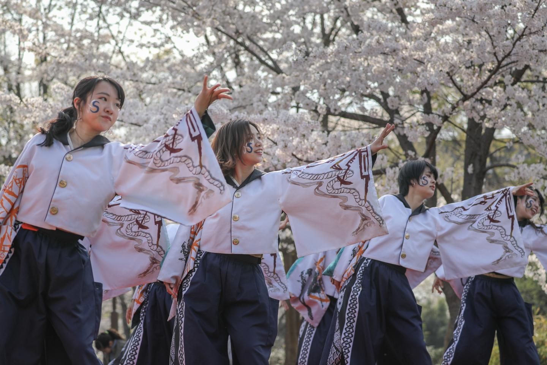 odorinchu2019tonerisakura-10.jpg