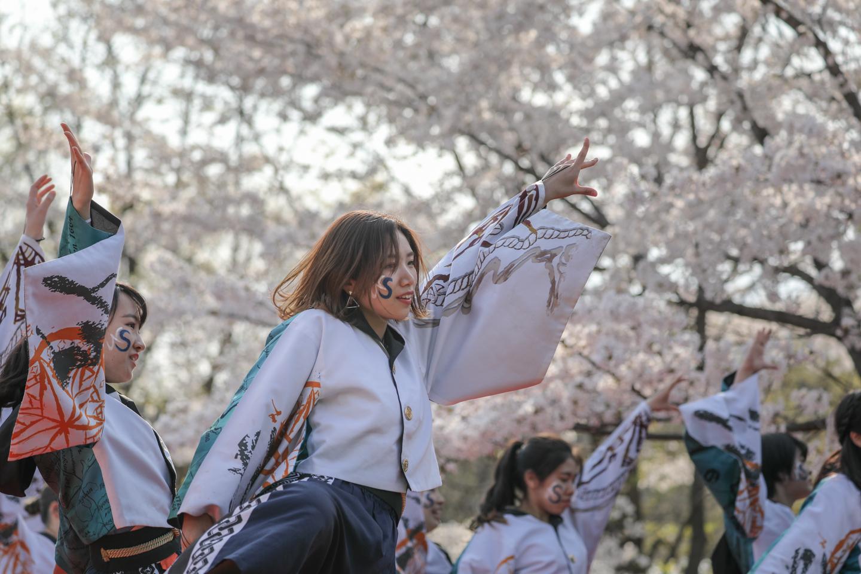 odorinchu2019tonerisakura-12.jpg