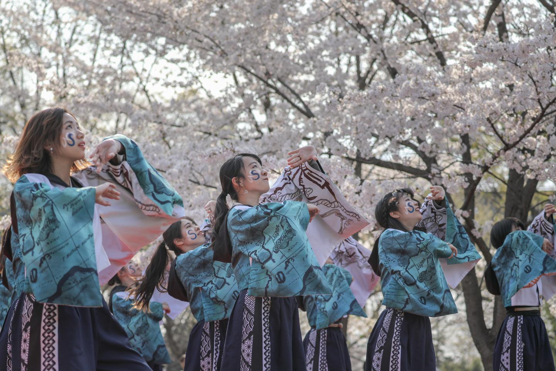 odorinchu2019tonerisakura-13.jpg