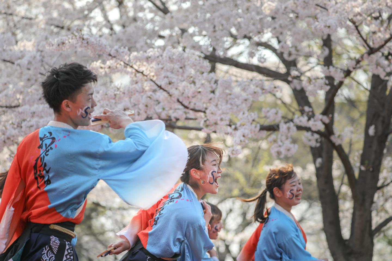 odorinchu2019tonerisakura-28.jpg