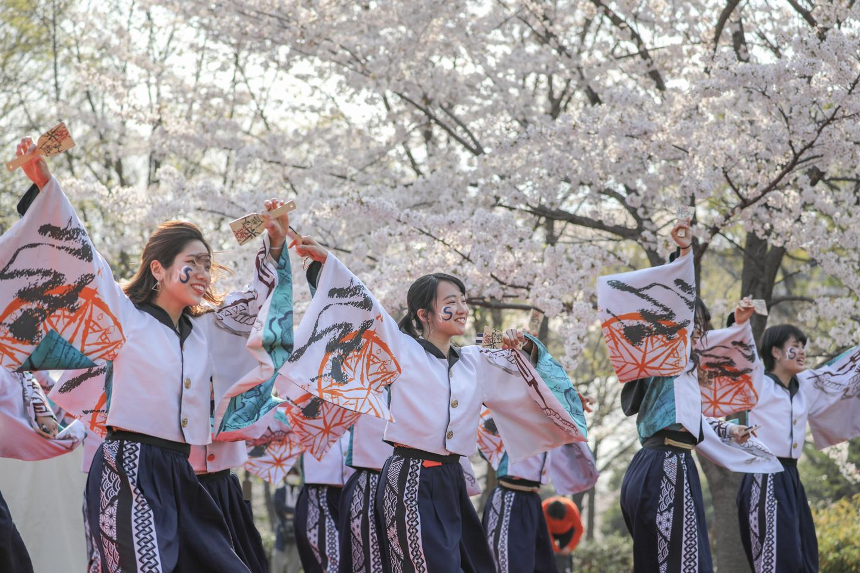 odorinchu2019tonerisakura-3.jpg