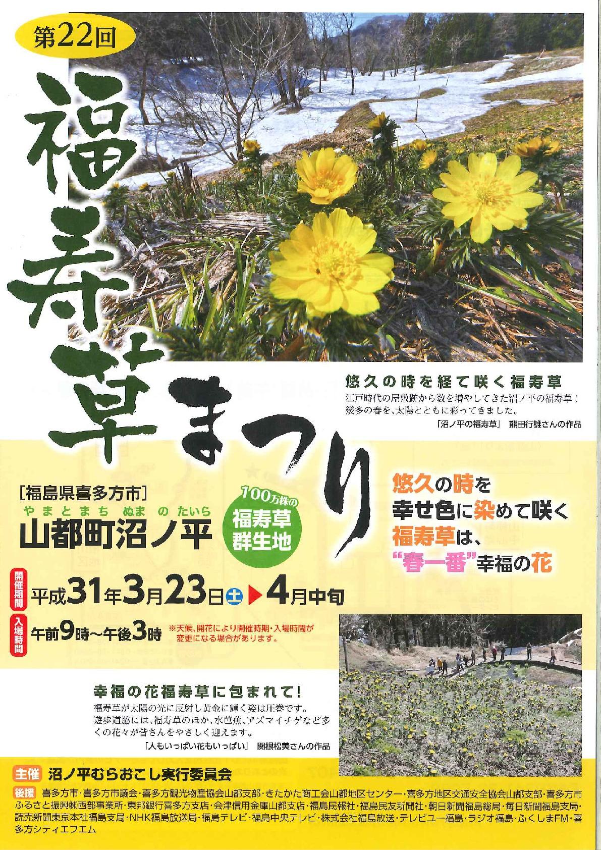 福寿草-1