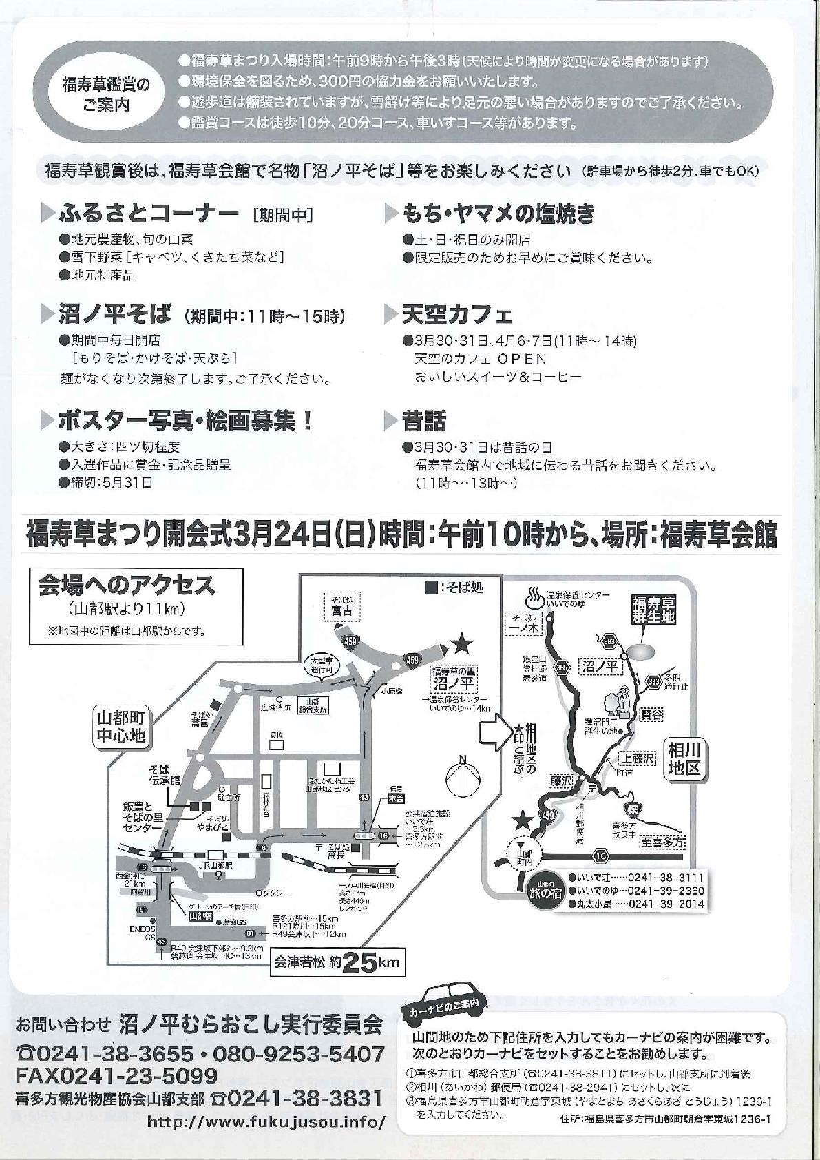 福寿草-2