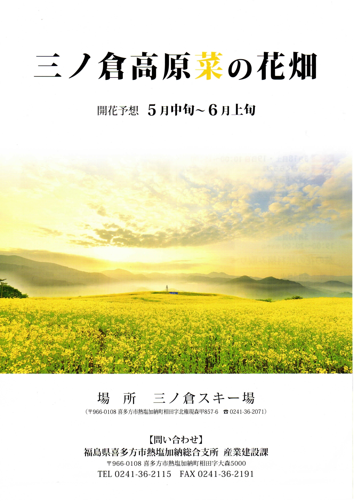 菜の花-0001