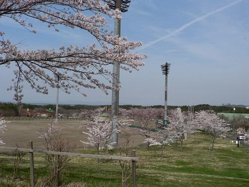 桜の大高山公園