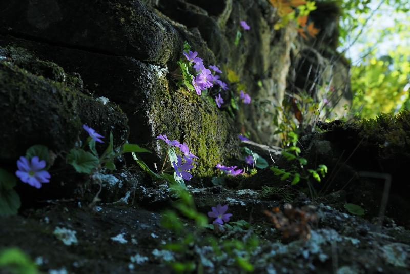 shinanokozakura014.jpg