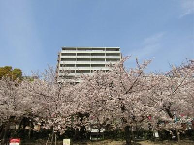 2019 桜3