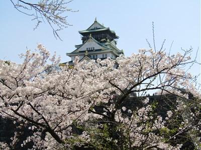 s-2019 大阪城さくら3