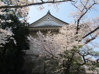 s-2019 大阪城さくら6