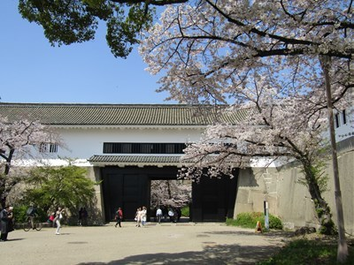 s-2019 大阪城さくら7