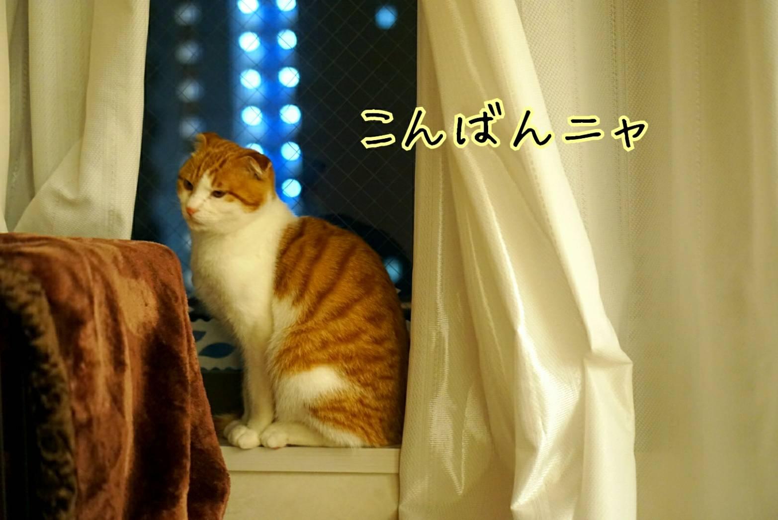 窓に佇むだるま11