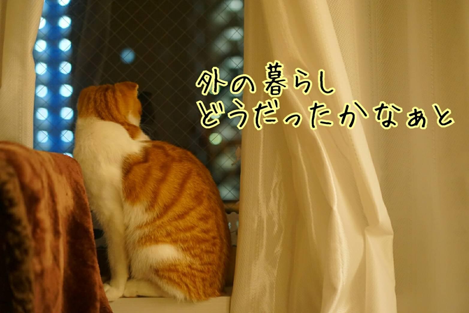 窓に佇むだるま14