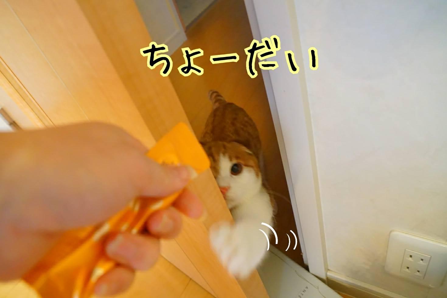 平成最後の日16
