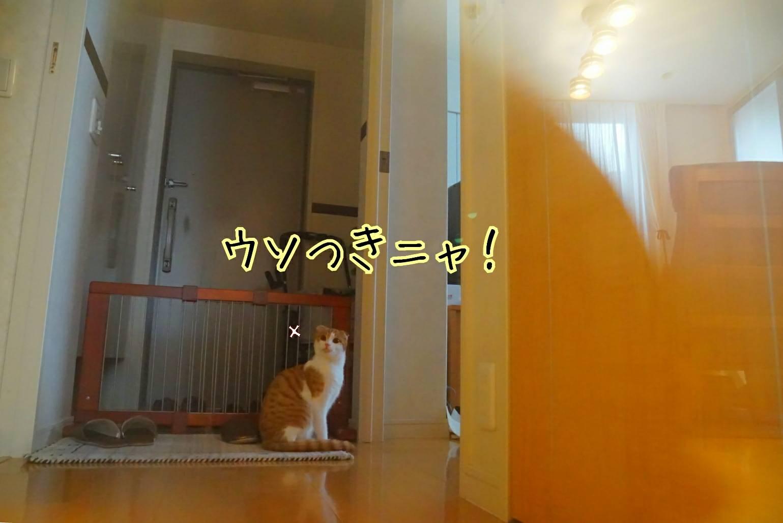 平成最後の日19