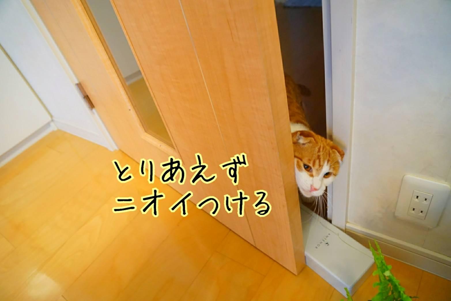 平成最後の日20